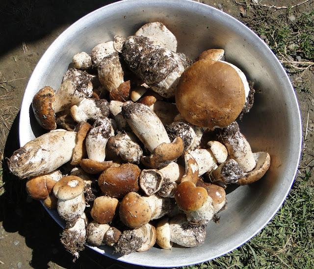 Porcini Mushrooms from Ukrainian Carpathians