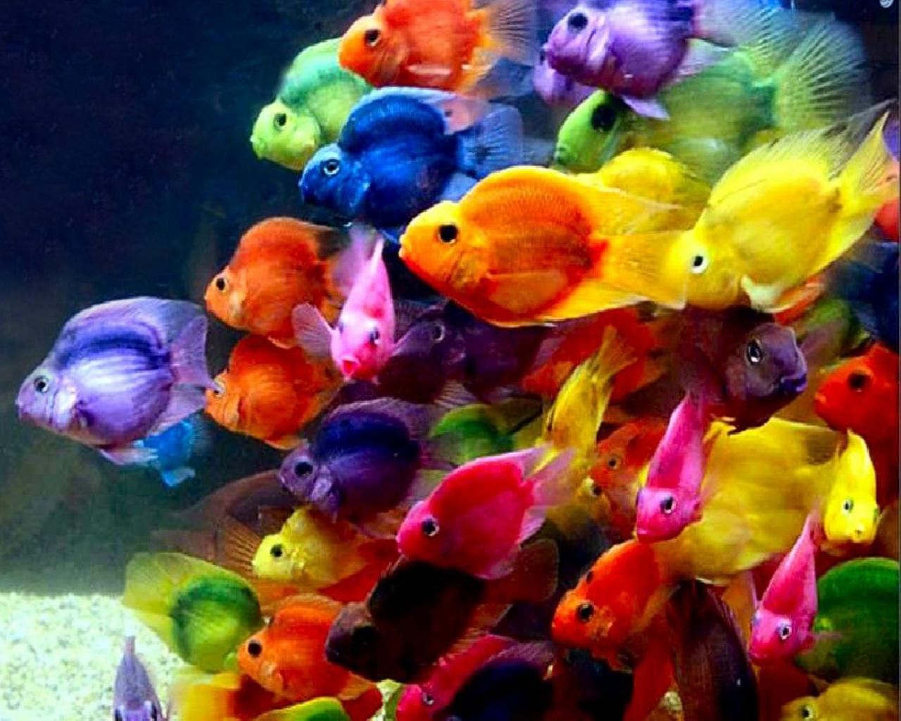 Beautiful Wallpapers Beautiful Fish Wallpaper