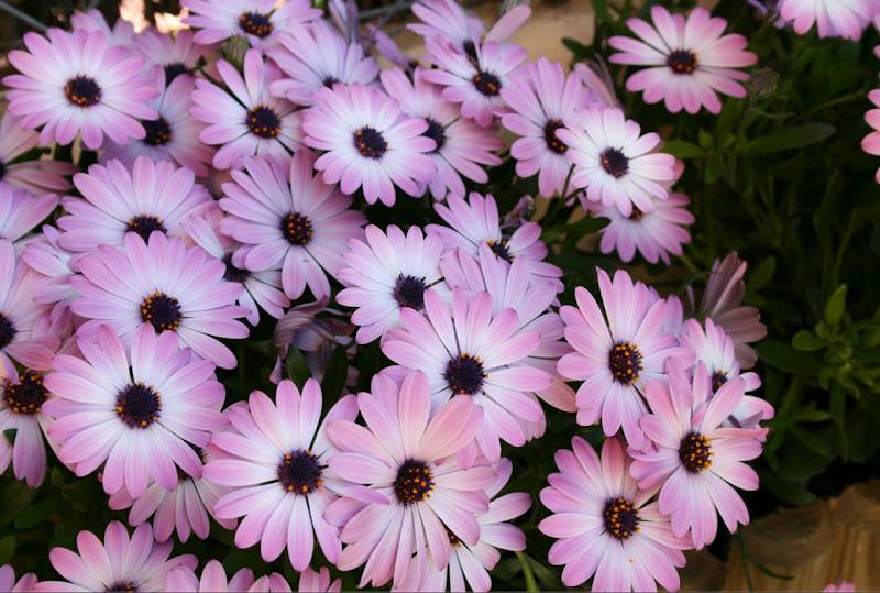 Mams Todoterreno Flores en Primavera