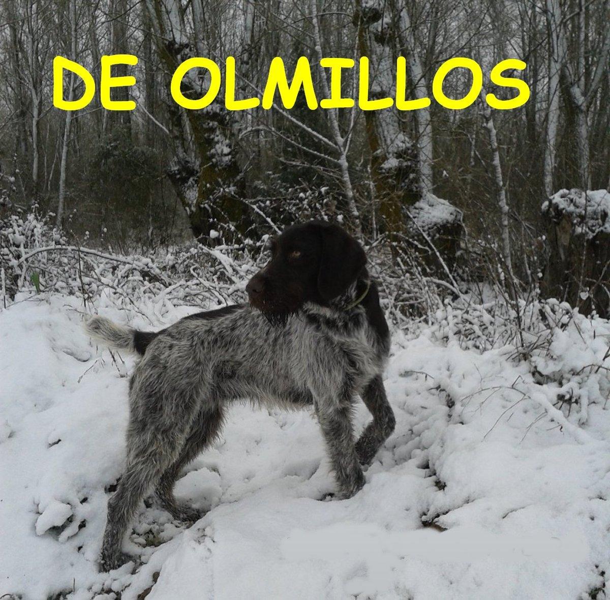 """""""DE OLMILLOS"""""""