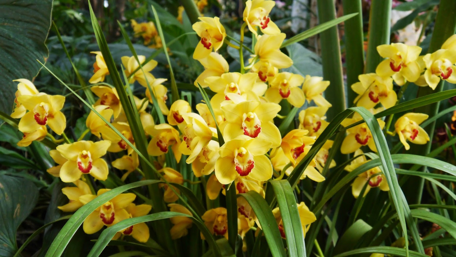 The Food Trotter: 1001 Orchids, at the Jardin des Plantes / 1001 ...