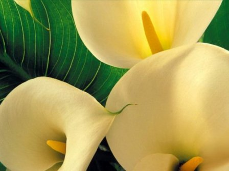 Consider the Lilies Poetry