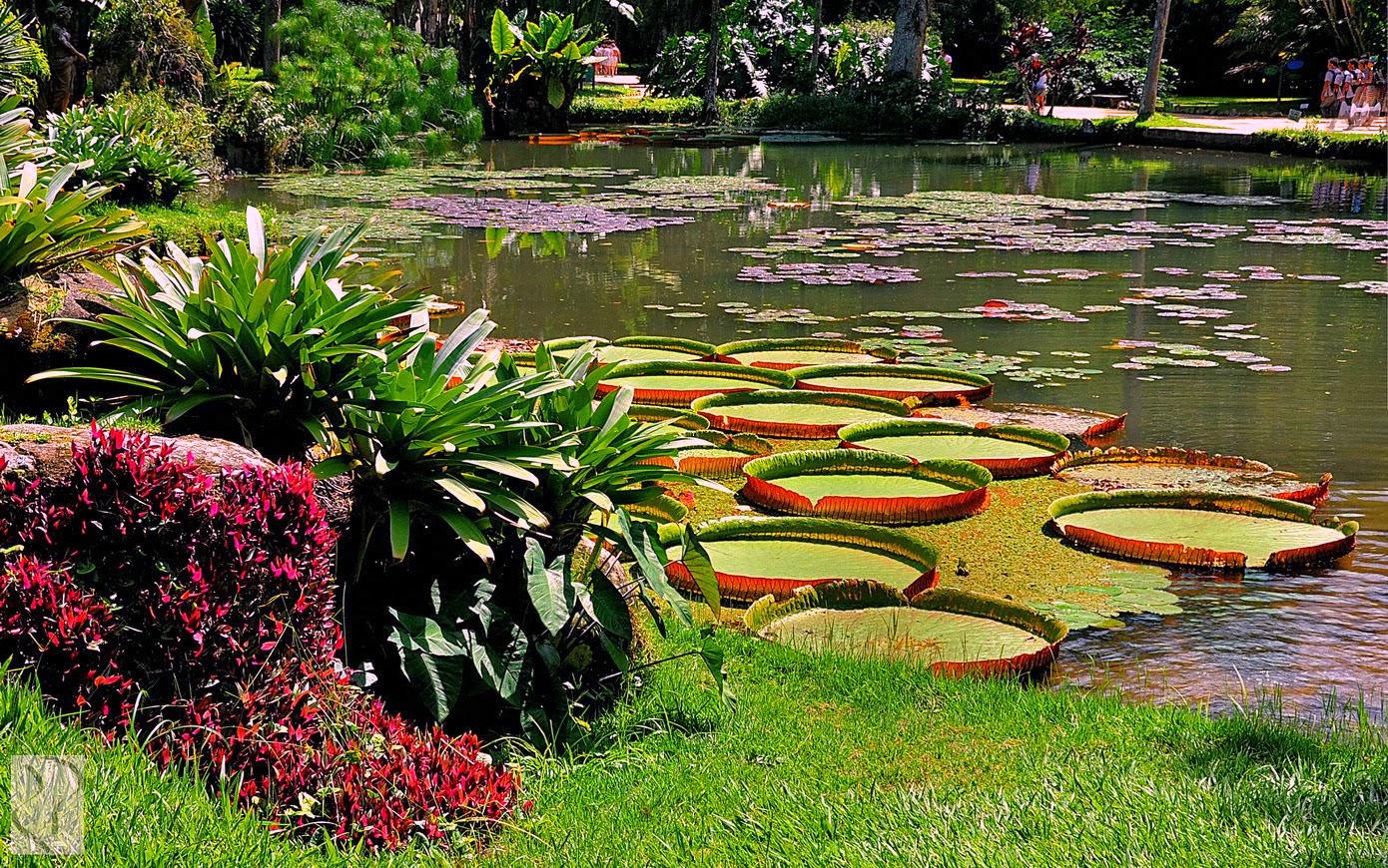 Jardim Botanico Rio De Janeiro~ Imagens Do Jardim Botanico