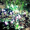 Φωτογραφίες από τη Μαργαρίτα Αντωνίου: Φθινοπωρινές κουκίτσες