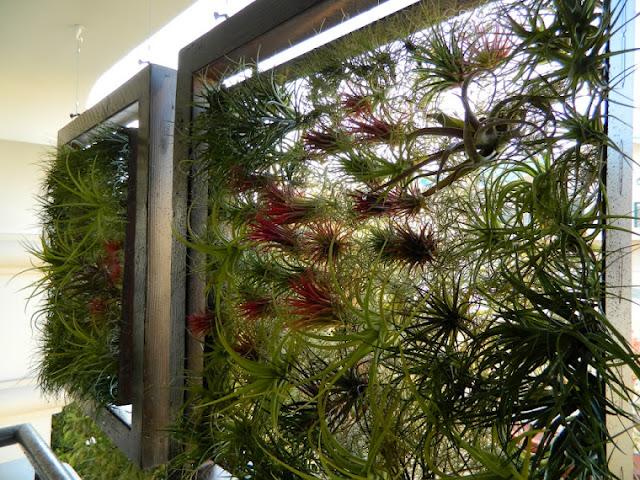 Jardín vertical de Tillandsias
