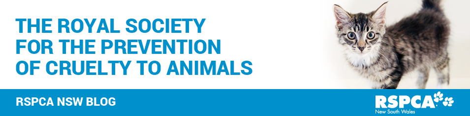 RSPCA NSW Blog