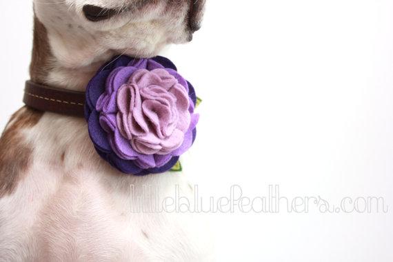 Un broche con forma de flor para perros