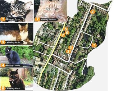 7 ekor kucing peliharaan menghilang secara misterius dalam radius 300 yard di tiga jalan di Caterham, Surrey, Inggris