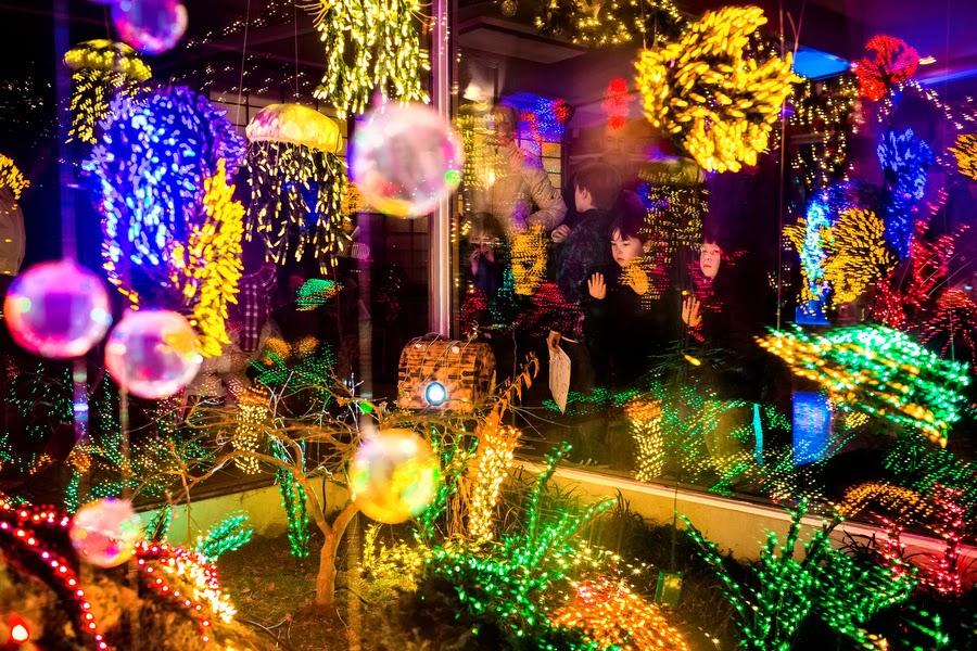 garden dlights at the bellevue botanical garden - Bellevue Christmas Lights