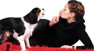 tips-adiestramiento-canino-mi-perro-ladra-mucho-consejos-psicologia-animal