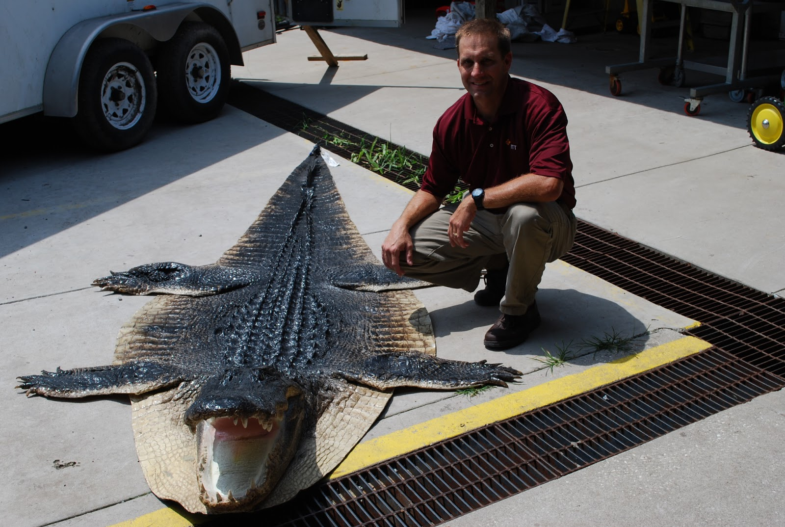 Folks Are Beginning To Get Their Calls From Cordrayu0027s Taxidermy To Pick Up  Alligators. Hereu0027s A Beautiful Alligator Rug!