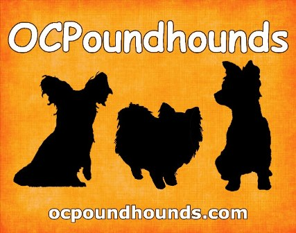 OCPOUNDHOUNDS