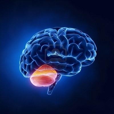 Relaci n del cerebelo con las funciones cognitivas
