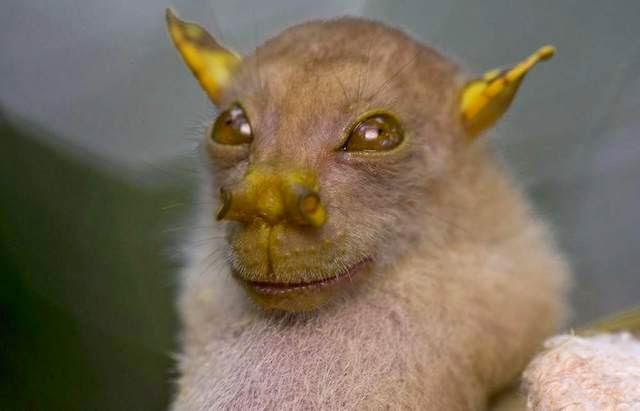 FOTOS – Los animales más raros del mundo