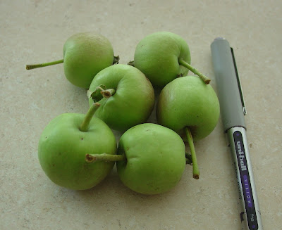 small apples picked off of Vicky's apple tree
