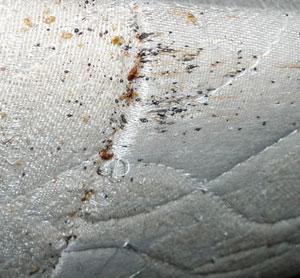 Qualico Pest Control