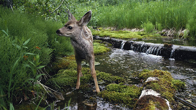 Nature beauty Wallpaper
