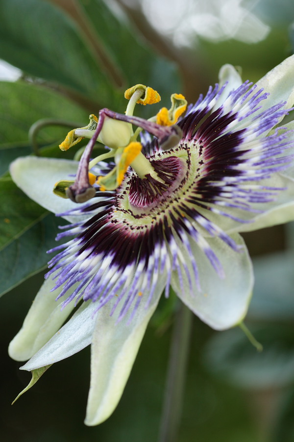 john maria 39 s garden pages garden bloggers 39 bloom day. Black Bedroom Furniture Sets. Home Design Ideas