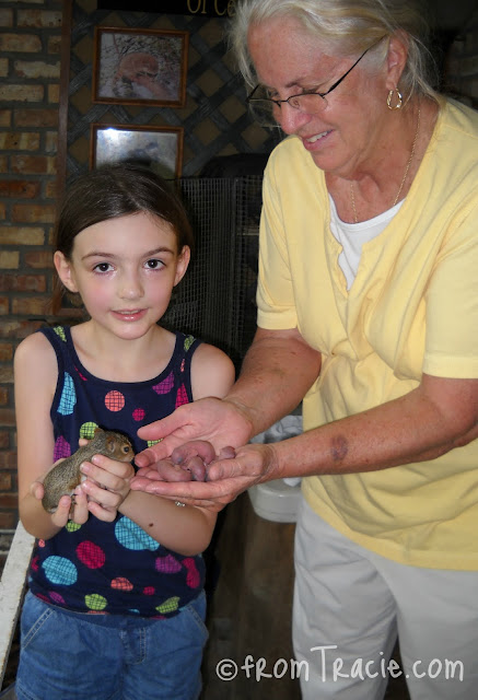 Katarina holding a baby Gray Squirrel and Four Newborn Baby Squirrels
