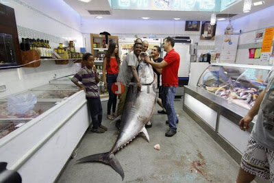 Huge Tuna Seen On www.coolpicturegallery.us
