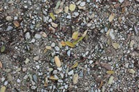 Gravel and tiny leaves on the ground texture package