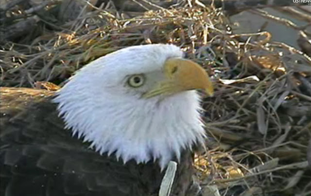 movie live stream camera of eagles