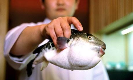 pesce palla fugu