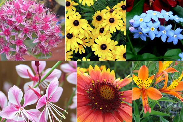El jardinero plantas y flores las mejores flores for Arbustos perennes para jardin