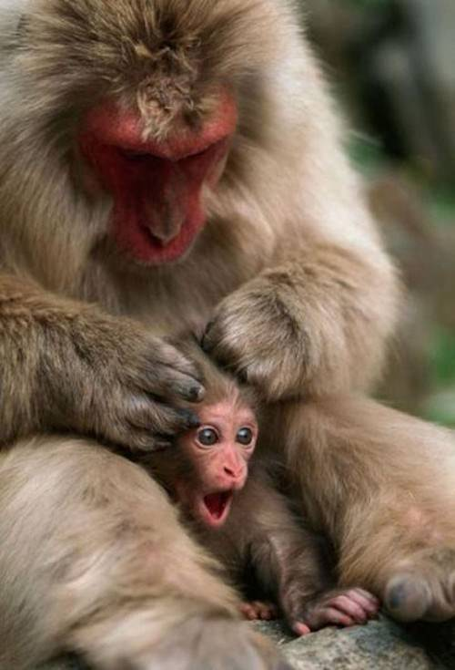 love animals monkey in - photo #9