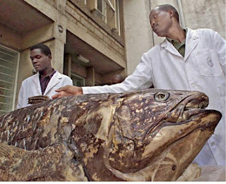 5 Misteri Kemunculan Monster Laut Yang Menggegerkan Dunia