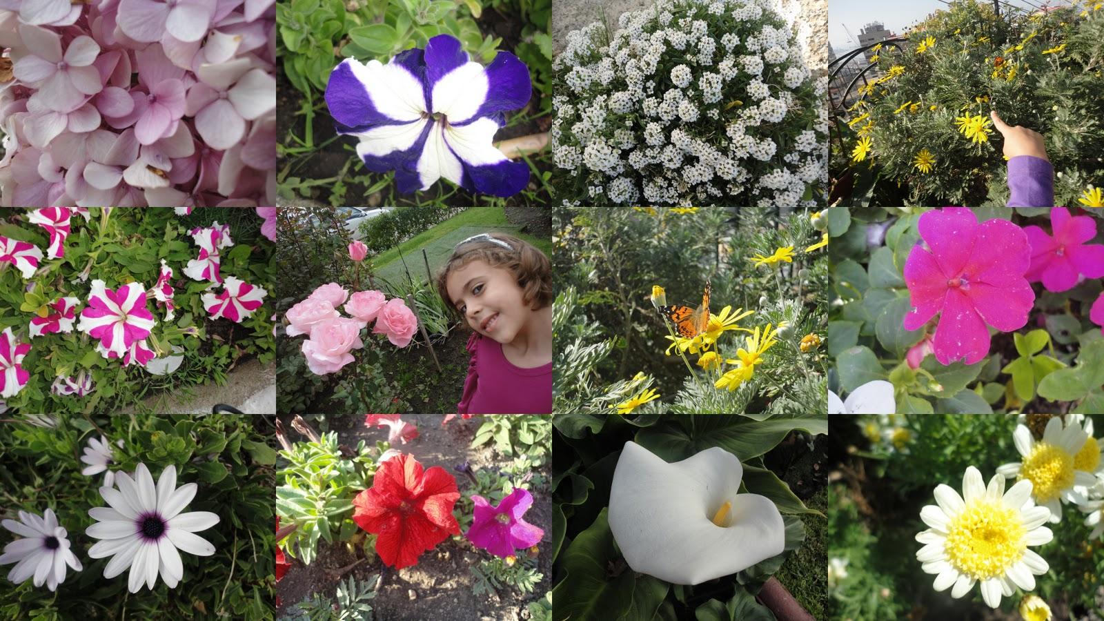flores cidade jardim: cidade jardim inspirou Sofia a virar fotógrafa de flores, confira