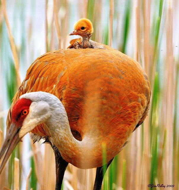 Cigüeña Bebé