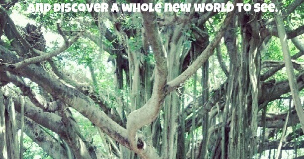 Little Moments: The Banyan tree