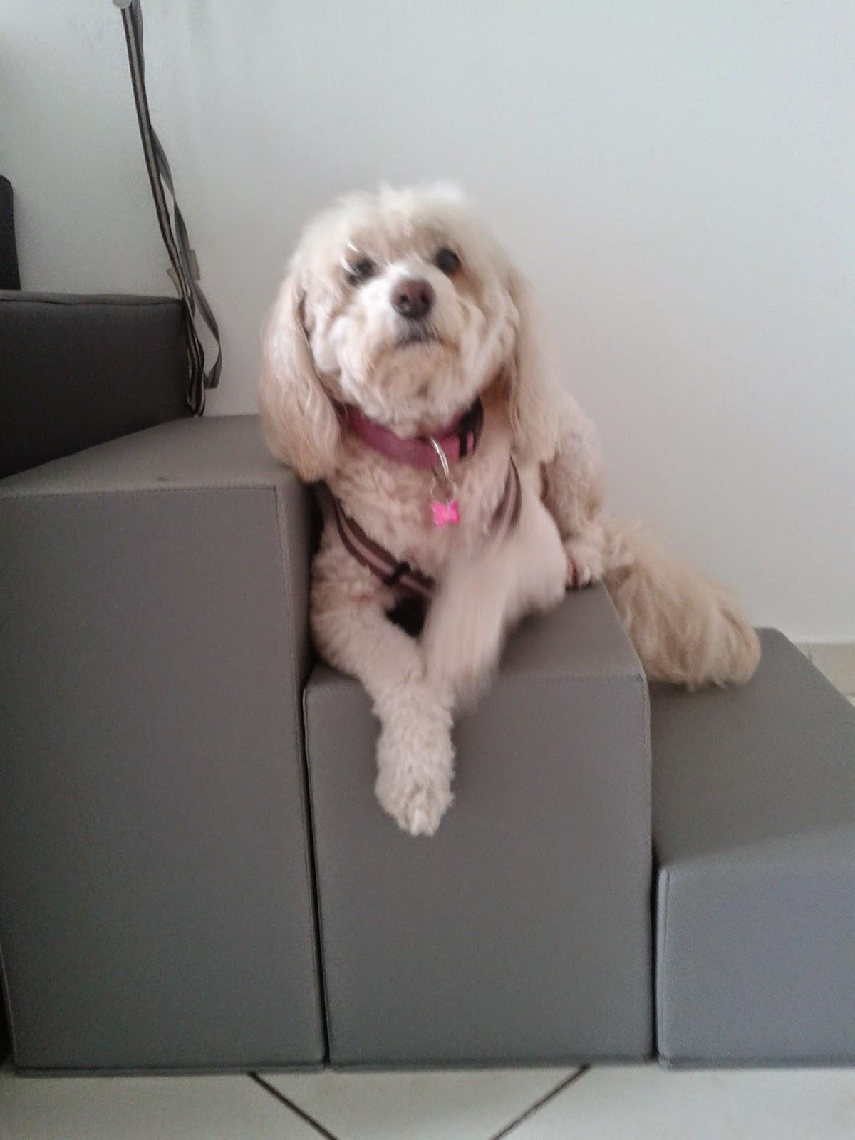 escadas para cães