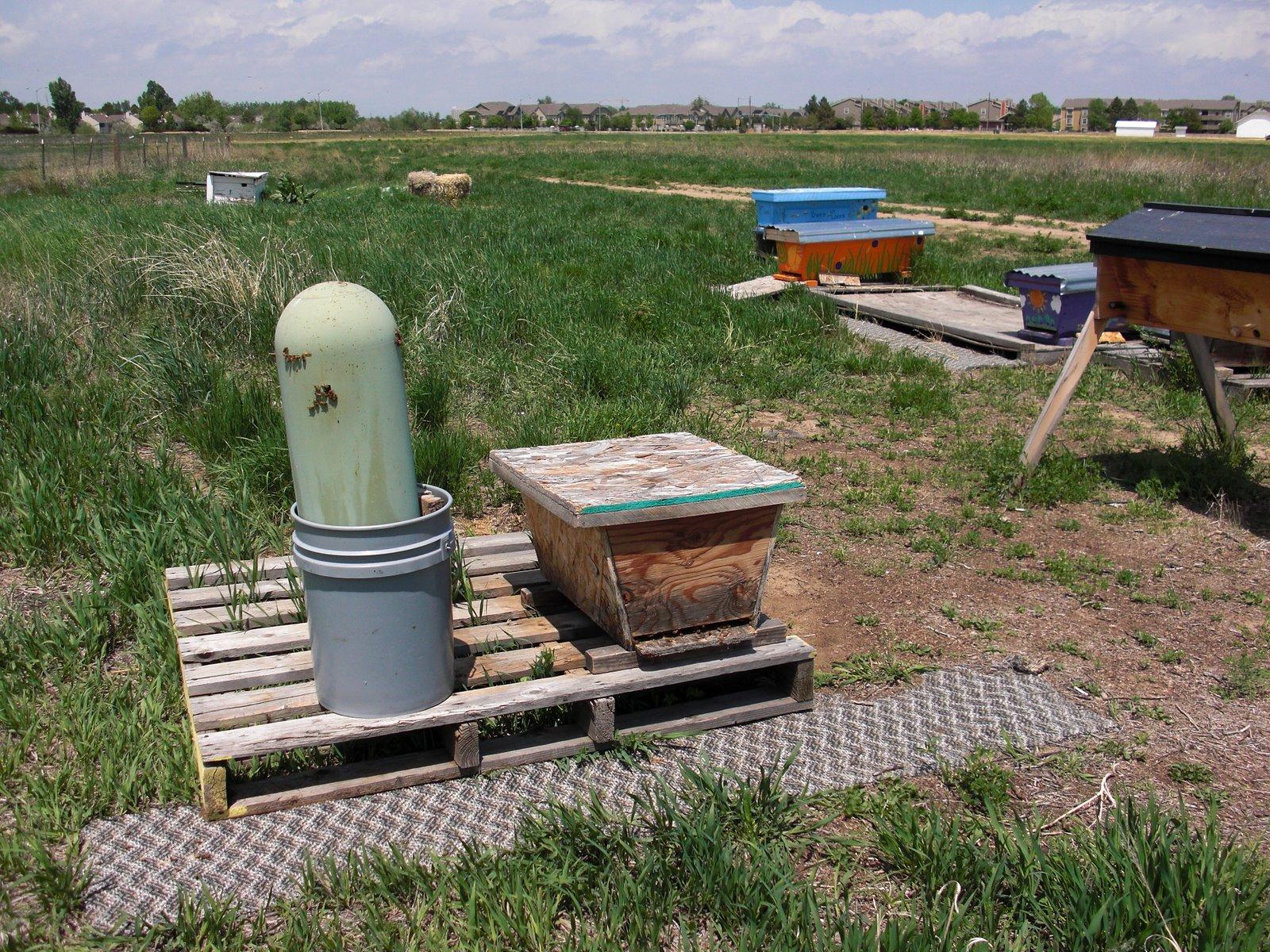 backyard hive