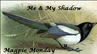 Magpie Monday
