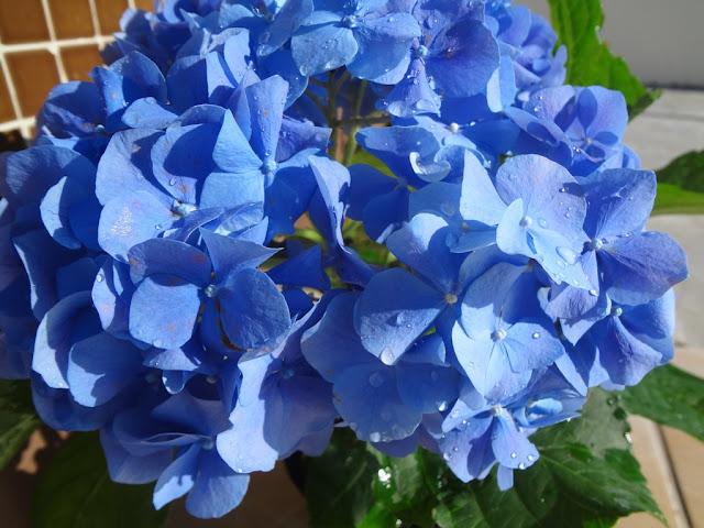 Como cuidar e se beneficiar desta linda e delicada flor