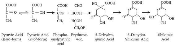 Shikimic acid Pathway