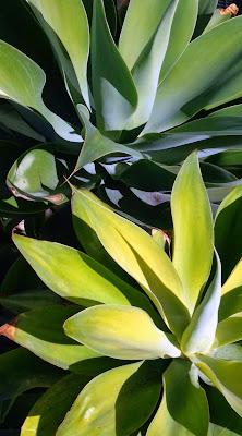 SoCo Succulent Garden by Lavende&Lemonade
