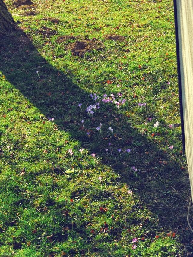 Late Winter-Spring Wild flowers Austria