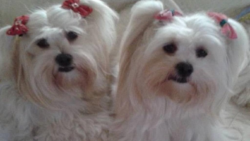 Kiara und Chasca Firbas
