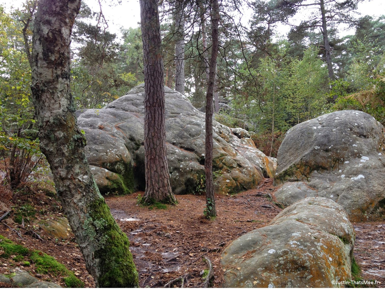 Forêt de Fontainebleau domaniale foret d'exception label national