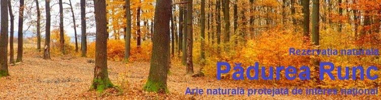 Rezervația naturală Pădurea RUNC