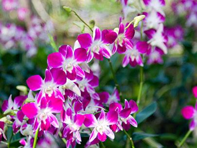 bunga hias taman