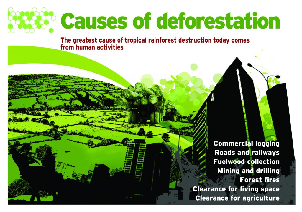 causes and effects of the amazons deforestation Cattle ranching is now the biggest cause of deforestation in the amazon,  the  impact this is having on the forest is huge – between 1996 and.