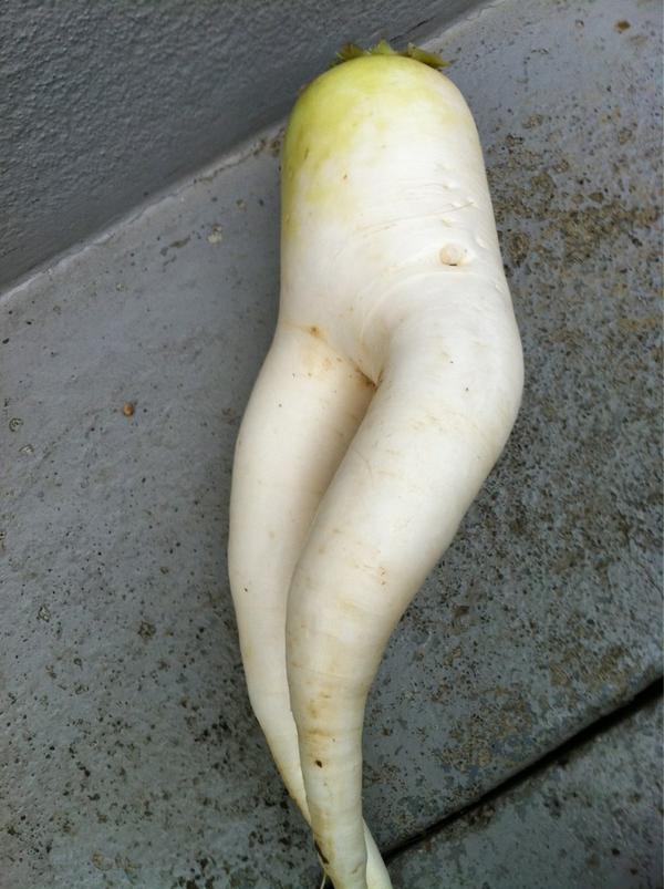 白蘿蔔美腿