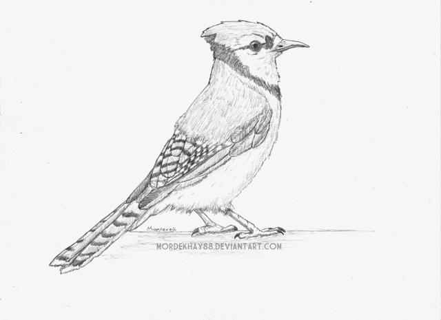 Blue Jay - Mordecai por Mordekhay88
