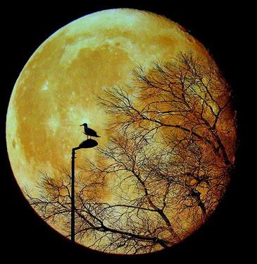 Como a mais bela noite de luar :