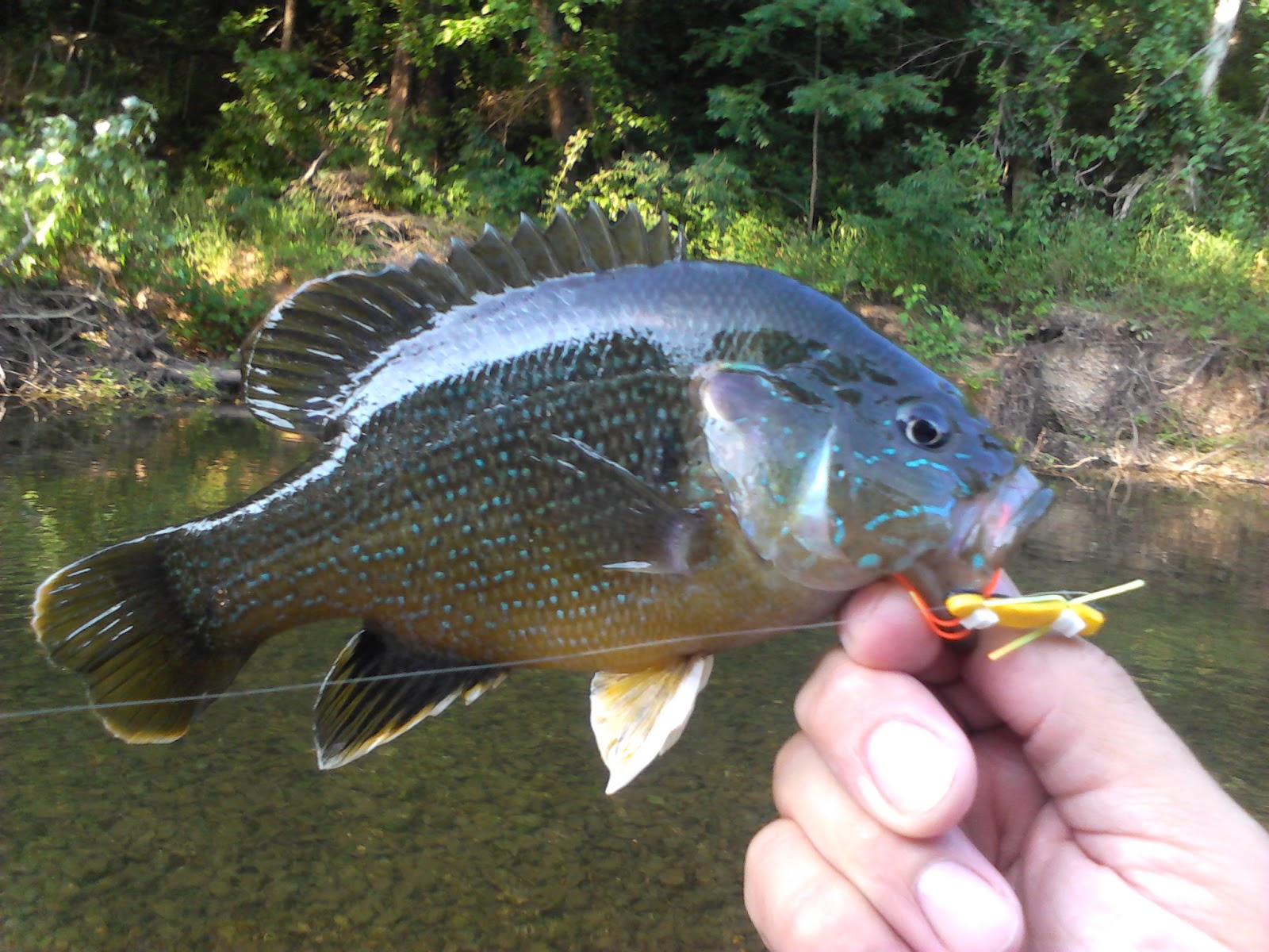 Buggin 39 out simply smallmouth and panfish chernobyl ant for Smallmouth bass fly fishing