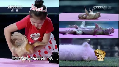 Han Jiaying can hypnotize animals with just the stroke of her hand